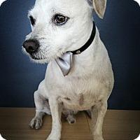 Adopt A Pet :: Rosco - Marina del Rey, CA