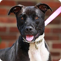 Adopt A Pet :: Chauncy - Kettering, OH