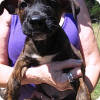 Adopt A Pet :: FRISKY - Lincolndale, NY