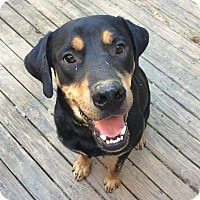 Adopt A Pet :: Luther is Loveable! - Olive Branch, MS