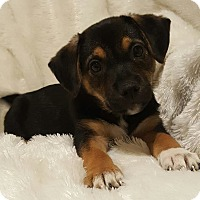 Adopt A Pet :: Xena - Monroe, NC