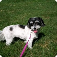 Adopt A Pet :: Bella - Bellbrook, OH