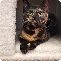 Adopt A Pet :: Jill - Circleville, OH