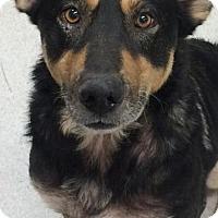 Adopt A Pet :: Rocky - Spokane, WA