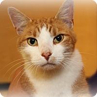 Adopt A Pet :: Ringo - Springfield, PA