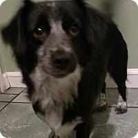 Adopt A Pet :: Bonnie - San Diego, CA
