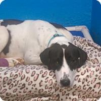 Adopt A Pet :: Liz - Pompton Lakes, NJ