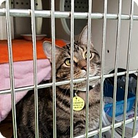 Adopt A Pet :: Molasses - THORNHILL, ON