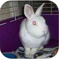 Adopt A Pet :: Lionel - Williston, FL