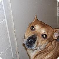 Adopt A Pet :: Bonnie - Paris, IL