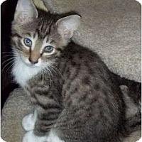 Adopt A Pet :: Bizzy - Dixon, IL - Montgomery, IL