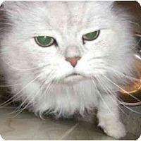Adopt A Pet :: Max - Strathmore, AB