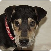 Adopt A Pet :: Sahara - Phoenix, AZ