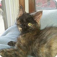 Adopt A Pet :: Ember - Cleveland, OH