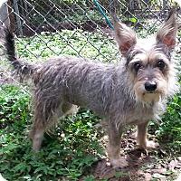 Adopt A Pet :: Krystal - Orlando, FL