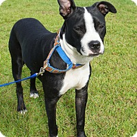 Adopt A Pet :: DANNY - North Augusta, SC