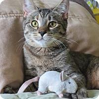 Adopt A Pet :: Chloe - San Rafael, CA