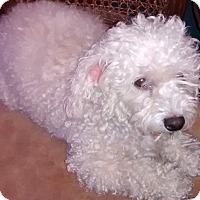 Adopt A Pet :: Tessy Sue - Woodland, CA