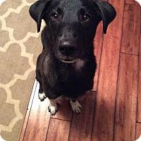 Adopt A Pet :: Boone - Uxbridge, MA