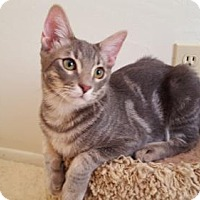 Adopt A Pet :: Romeo **Lease for Life** - Glendale, AZ