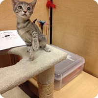 Adopt A Pet :: Polly - Scottsdale, AZ