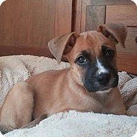 Adopt A Pet :: Mr. Winkles - Arden, NC
