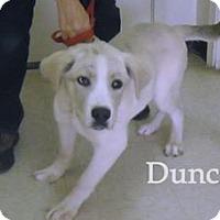 Adopt A Pet :: Pup Duncan - Rockville, MD