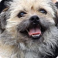Adopt A Pet :: Griffyn - Oakley, CA