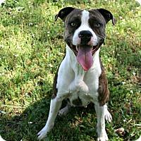 Adopt A Pet :: Bessie - Lufkin, TX