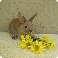 Adopt A Pet :: Tortolini - Bonita, CA