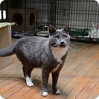 Adopt A Pet :: Blair - Brooklyn, NY