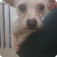 Adopt A Pet :: JoJo - Fullerton, CA