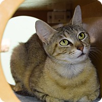 Adopt A Pet :: Vanessa - Carencro, LA