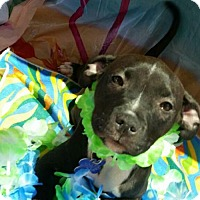 Adopt A Pet :: Marley - Richmond, CA