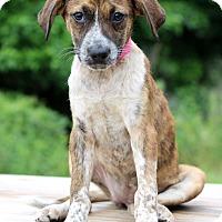 Adopt A Pet :: Velvet - Waldorf, MD