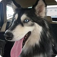 Adopt A Pet :: Moon - Scottsdale, AZ