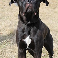 Adopt A Pet :: Blackie - Centerburg, OH