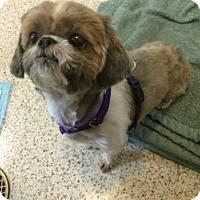 Adopt A Pet :: Sandy - Harrisburg, PA