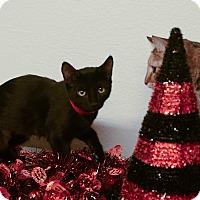Adopt A Pet :: NYLA - Phoenix, AZ