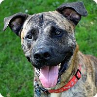 Adopt A Pet :: Dino - Pontiac, MI