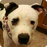 Adopt A Pet :: Vinnie - Concord, OH