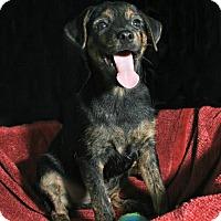 Adopt A Pet :: Mac - Lufkin, TX