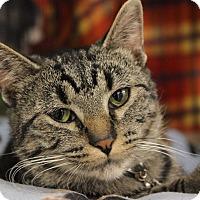 Adopt A Pet :: Becker - New Richmond,, WI