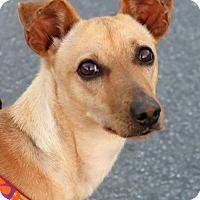 Adopt A Pet :: Maizy - Rochester, NY