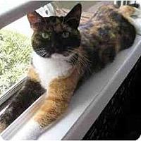 Adopt A Pet :: Natalie - Portland, OR