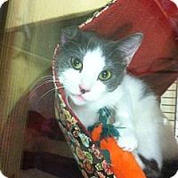 Adopt A Pet :: Shady - Monroe, GA