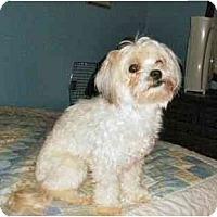 Adopt A Pet :: Zoe - Mooy, AL