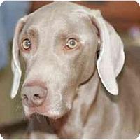Adopt A Pet :: Jasper  **ADOPTED** - Eustis, FL