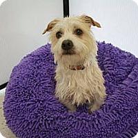 Adopt A Pet :: LENNY - Mission Viejo, CA