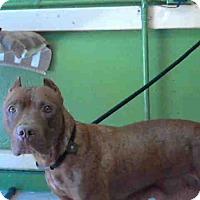 Adopt A Pet :: BIRDIE - Encino, CA